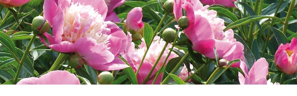 header_bepflanzung